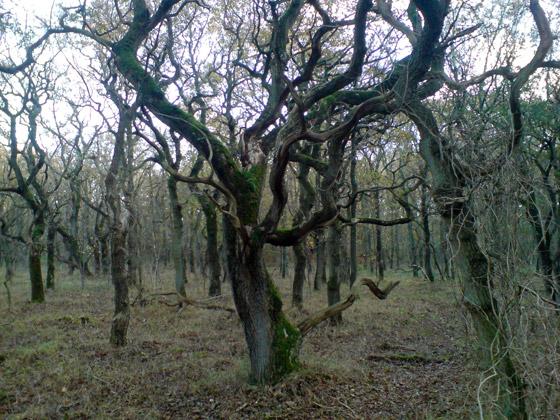 bomen_bergen