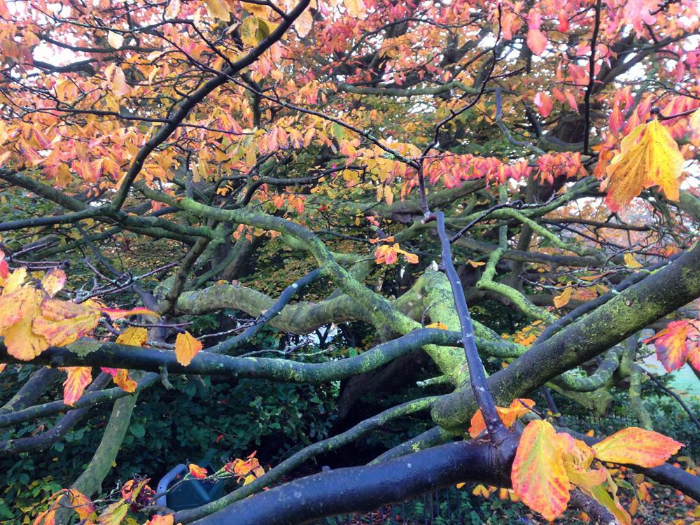 herfstboom-halloween-2016