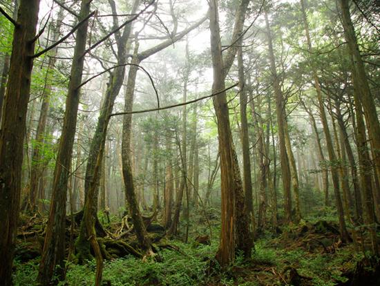 Het zelfmoordbos.