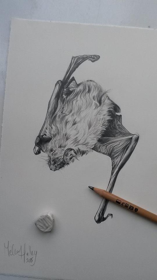 vleermuis-halley